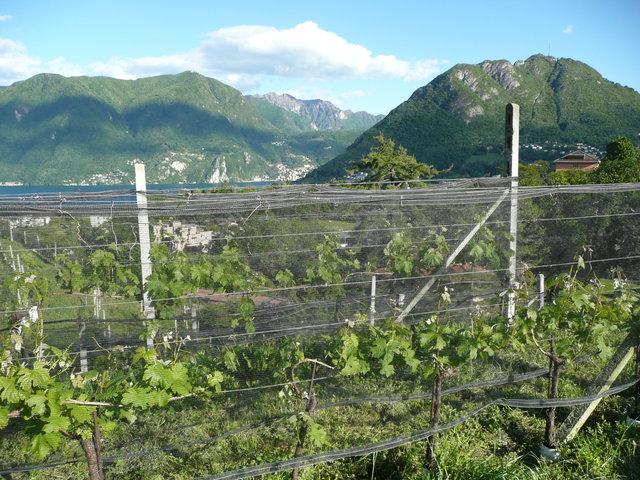 sullo sfondo Campione d'Italia e il Monte San Salvatore